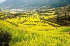 Blommahav landskap i för det wuyuan länet, jiangxi, porslin Royaltyfria Bilder