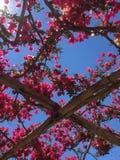 Blommahimmel arkivbilder