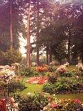 Blommahimmel Arkivbild