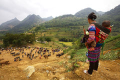 BlommaHMong folk Arkivbild