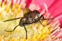 blommahousefly arkivbild