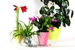 blommahusväxter Arkivfoto