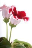 blommahuvud Arkivfoton