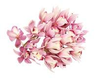 Blommahuvud av cymbidiumen Arkivbild