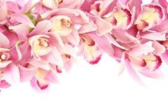 Blommahuvud av cymbidiumen Royaltyfri Fotografi