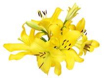 Blommahuvud av liljan Arkivbild