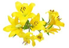 Blommahuvud av liljan Arkivbilder