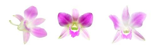 Blommahuvud av orkidén Arkivfoton