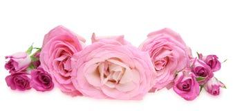 Blommahuvud av rosor Arkivbilder
