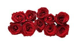 Blommahuvud av rosor Royaltyfria Bilder
