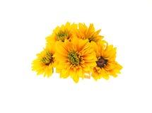 Blommahuvud av Rudbeckia Royaltyfri Foto