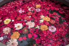 Blommahuvud som svävar i vatten, ljust gladlynt, dag inga personer royaltyfri bild