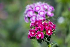 blommaillustrationen shoppar smellcomp Royaltyfri Foto