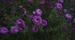 blommaindiansommar Arkivbilder