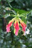 blommainsida - ut Royaltyfri Foto