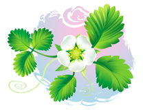 blommajordgubbe Arkivbild