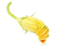 blommakalebasser Royaltyfri Bild