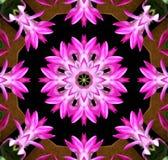 blommakaleidoscopepink Arkivbilder