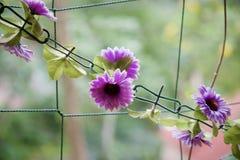 blommakedja arkivfoto