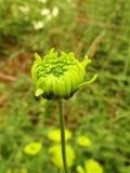 Blommaknopp i trädgård royaltyfri fotografi