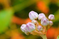 blommaknoppar i fantasivärld Arkivbild