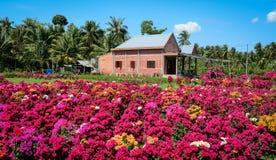 Blommakoloni i den Mekong deltan, Vietnam fotografering för bildbyråer