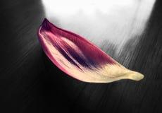 Blommakonst Blommor som svävar på vatten Fotografering för Bildbyråer