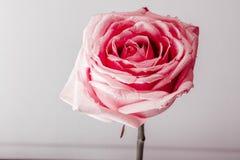 Blommakonst Blommor som svävar på vatten Royaltyfri Bild