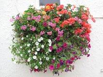 Blommakorg mot en stuckaturvägg Royaltyfri Bild
