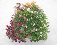 Blommakorg mot en stuckaturvägg Royaltyfri Fotografi