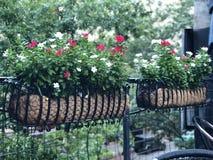 Blommakorgar Royaltyfria Bilder