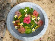 Blommakronblad fotografering för bildbyråer