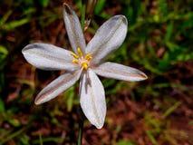 Blommakronblad för grönt gräs royaltyfria bilder