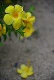 Blommakronblad med vatten Royaltyfri Bild