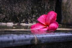 Blommakronblad på en våt trappa royaltyfria bilder