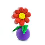 blommakruka Arkivbilder