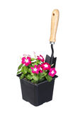 Blommakruka med det trädgårds- hjälpmedlet som isoleras på vit Royaltyfri Bild