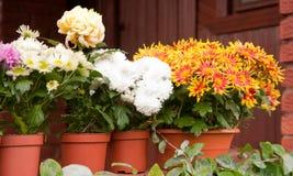 blommakrukar Royaltyfria Bilder