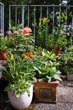 Blommakrukar Arkivfoto