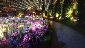 Blommakupol Singapore vid natt Royaltyfri Fotografi