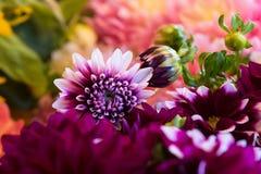 Blommakyssar gör dem att blomma Royaltyfria Bilder