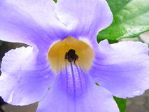 blommalampa - purpurt tropiskt royaltyfri bild