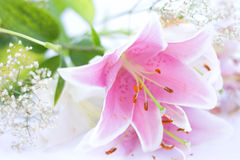 blommalilja Arkivfoto