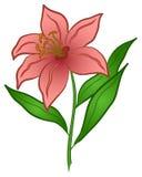 blommalilja Stock Illustrationer