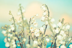blommaliljadal Arkivbilder
