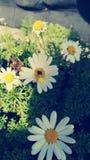 Blommaliv arkivbild