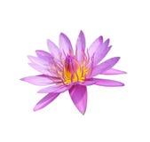 blommalotusblomma Royaltyfri Foto