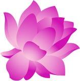 blommalotusblomma Royaltyfria Foton