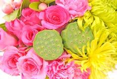 blommalotusblommar kärnar ur Royaltyfria Foton