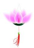 blommalyktalotusblomma Arkivbilder